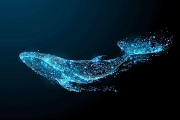 Digital Blue Whale