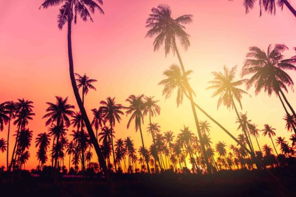 Palm Trees Silhouettes Sunset 1