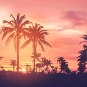 Palm Trees Silhouettes Sunset 2
