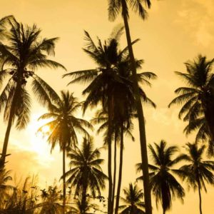 Palm Trees Silhouettes Sunset 5