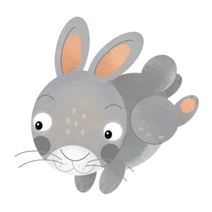 Rabbit Cartoon 2