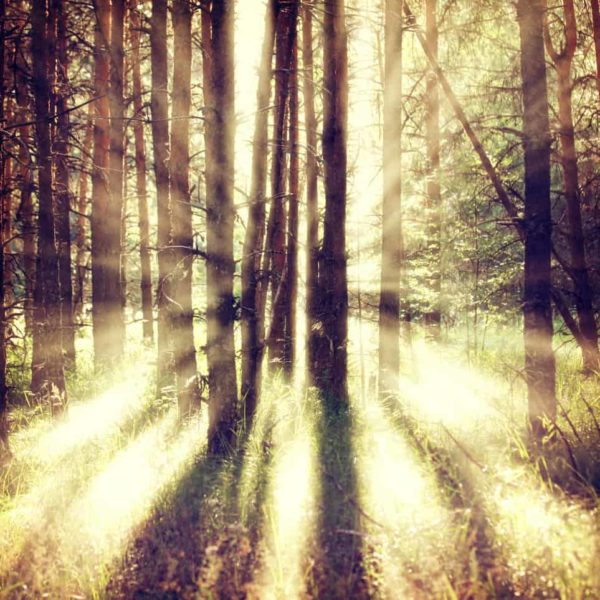 Sun Rays Through the Forest