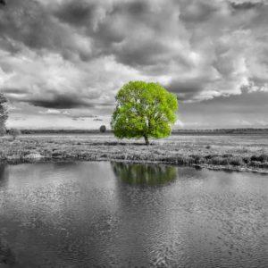 That Green Tree