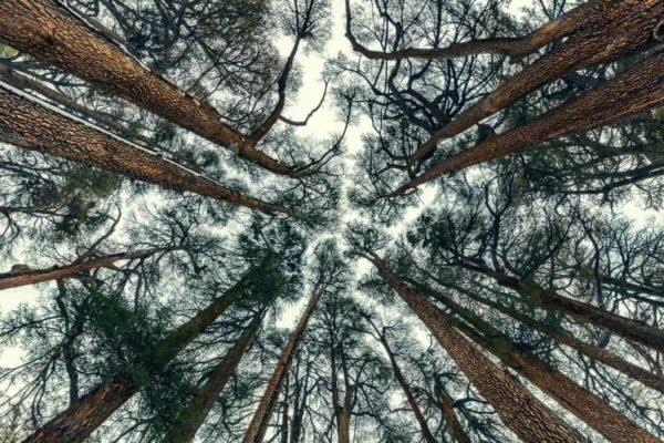 The Cedars of God Lebanon