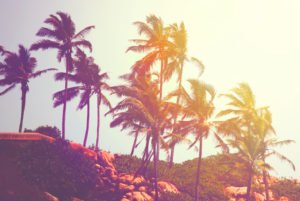 Tropical Beach in India