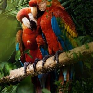 Beautiful Parrots surreal digital wall art prints
