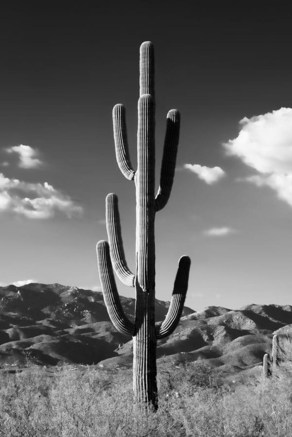 Lonely Cactus landscape photography canvas and framed wall art