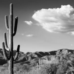 Saguaro Cactus Sunrise landscape photography canvas and framed wall art