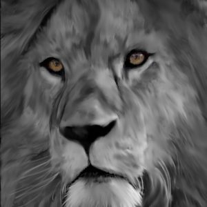 Lion In black and White abstract framed wall art