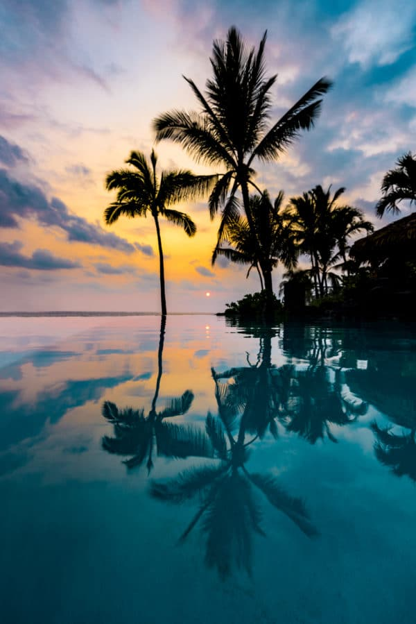 Palm Tree Reflection landscape photography canvas and framed wall art