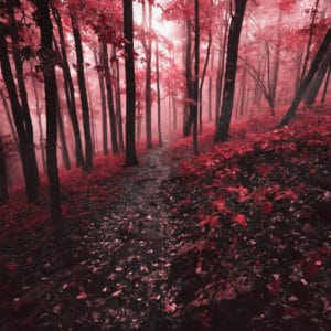 Red Forest landscape photography canvas and framed wall art