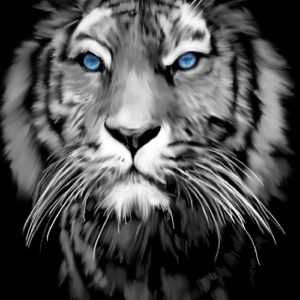 Tiger with Blue Eyes abstract framed wall art