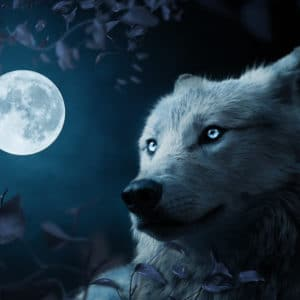 Wolf in beautiful night surreal digital wall art prints