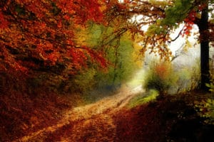 autumn forest edge abstract framed wall art canvas prints