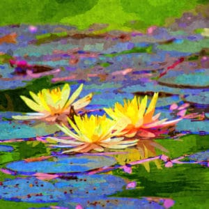 yellow water lillies abstract framed wall art canvas prints